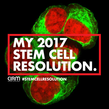 Stem Cell Resolution Instagram mitosis