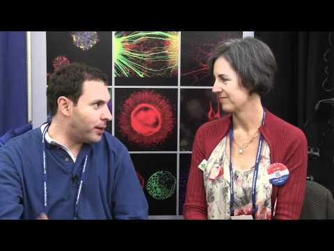 Ben Kaplan: Real progress in stem cell research