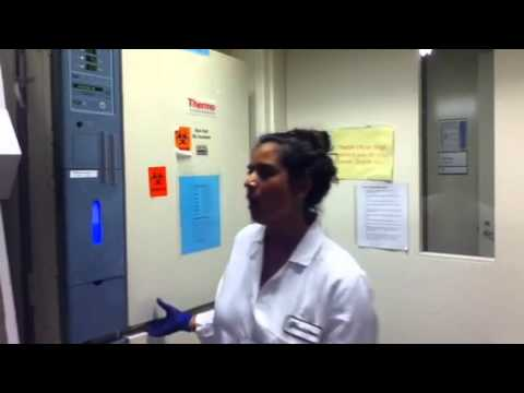 Najwa Anasse - High School Stem Cell Research Intern - June 2013